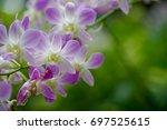 flower | Shutterstock . vector #697525615