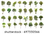 isolated tree on white... | Shutterstock . vector #697550566