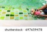 pomeranian dog wear life jacket ...   Shutterstock . vector #697659478