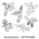 sketch berries set vector... | Shutterstock .eps vector #697814086