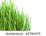 Fresh Wet Grass Closeup On...