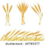 ripe yellow wheat ears ... | Shutterstock .eps vector #69785377
