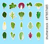 cartoon green salad leaves... | Shutterstock . vector #697857685