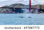 rare sighting of mother...   Shutterstock . vector #697887775