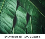 green leaves background | Shutterstock . vector #697928056