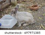 Rabbit Drinking Water.