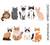 domestic cats in cartoon style. ... | Shutterstock . vector #698011642