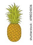 hand drawn decorative pineapple.... | Shutterstock .eps vector #698024836