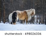 yakut horse. northern horse... | Shutterstock . vector #698026336