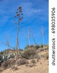 Small photo of Vertical shot of agave plants on the dry coast of the Cabo de Gata, Almeria, Southern Spain