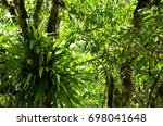 plants growing on large trees... | Shutterstock . vector #698041648