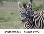funny zebra in etosha national... | Shutterstock . vector #698051992