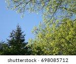 Backyard Tree Tops