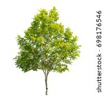 isolated tree on white... | Shutterstock . vector #698176546