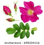 set of wild rose flower  buds... | Shutterstock . vector #698204116
