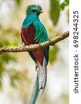 flying resplendent quetzal ... | Shutterstock . vector #698244325
