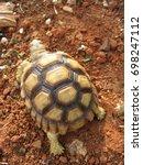 cute portrait of baby tortoise  ... | Shutterstock . vector #698247112