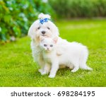 Stock photo maltese puppy and chinchilla cat embracing on green grass 698284195