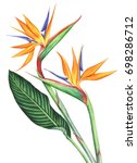bird of paradise flowers... | Shutterstock . vector #698286712
