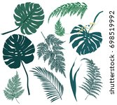 vector tropical palm leaves ...   Shutterstock .eps vector #698519992