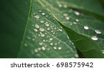 morning dew in the green leaf   Shutterstock . vector #698575942