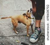 Small photo of cute Chihuahua dog love his owner and flatter his owner