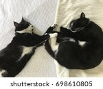 Stock photo two tuxedo cats sleeping on a bed touching paws view from above two tuxedo cats sleeping on a bed 698610805