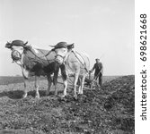 Man Plowing Field With Ox Draw...