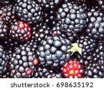 photo of macro detail big black ... | Shutterstock . vector #698635192