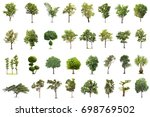 isolated tree on white... | Shutterstock . vector #698769502