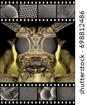 Small photo of Mango tree borer (Batocera rufomaculata) and electronic microscope photos of his eyes and mandible (insect mouthpart)