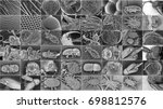 Insect Electron Microscope...