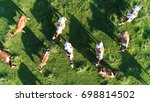 Stock photo aerial top down photo of meadow with red holstein friesians cattle grazing grass showing their long 698814502