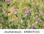 Cirsium Vulgare  Also Known As...