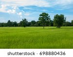 soothing green rice field with... | Shutterstock . vector #698880436