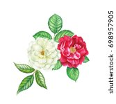 watercolor hand painted roses.... | Shutterstock . vector #698957905