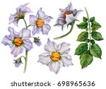 Watercolor Set Of Flowers And...