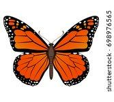 vector drawing of an orange... | Shutterstock .eps vector #698976565