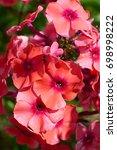 garden flowers | Shutterstock . vector #698998222