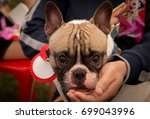 french bulldog in outdoor... | Shutterstock . vector #699043996