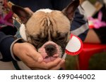 french bulldog in outdoor... | Shutterstock . vector #699044002