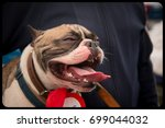 french bulldog in outdoor... | Shutterstock . vector #699044032