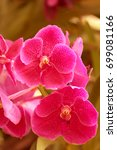 Small photo of Purple Orchid flowers caparison broom in the garden .