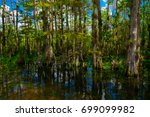 everglades national park.... | Shutterstock . vector #699099982