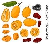 hand drawn sketch style kumquat ... | Shutterstock .eps vector #699127855