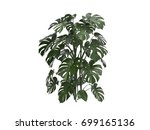 green leaves of monstera plant... | Shutterstock . vector #699165136