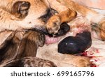 Small photo of A dog with Afterbirth.
