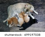 mother cat and kitten on wood... | Shutterstock . vector #699197038