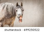 Stock photo funny horse face with open mouthed looking in camera at gray background place for text 699250522