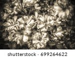 bunch of white roses in sepia | Shutterstock . vector #699264622